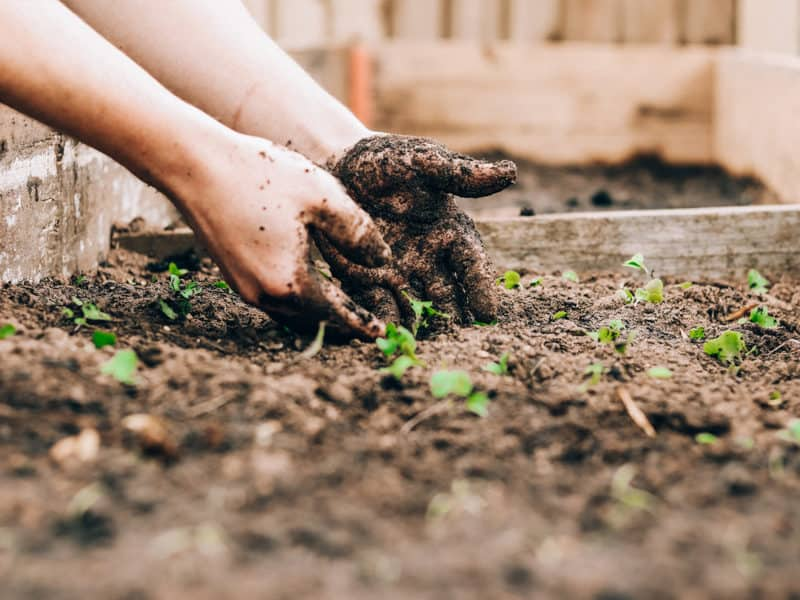 fast-growing seeds for classroom